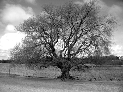 A stunning shot of a glorious tree at Hornsea Mere