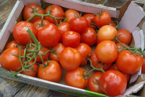 sharingourfoodadventures.com Our box of Tomatoes