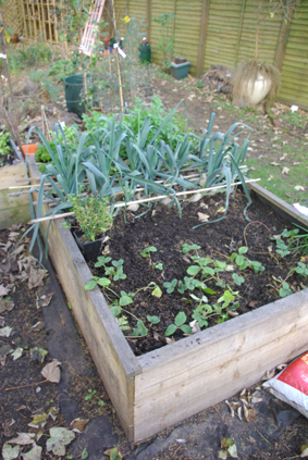 Raised Bed 1 with Leeks