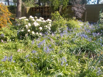Our mini Bluebell Wood