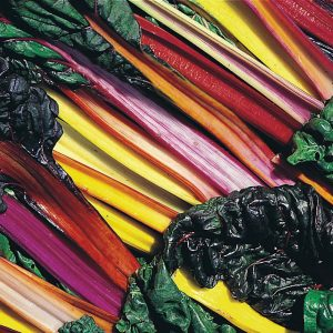 Swiss Chard 'Bright Lights' - courtesy Thompson & Morgan