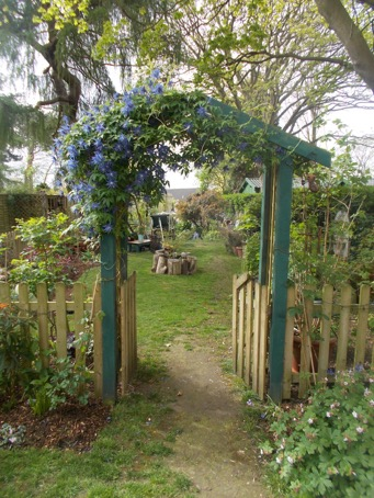 Clematis on new Archway.